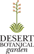 Las Noches De Las Luminarias at The Desert Botanical Gardens