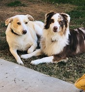 Ohana and Hazel Dog Days of Glendale